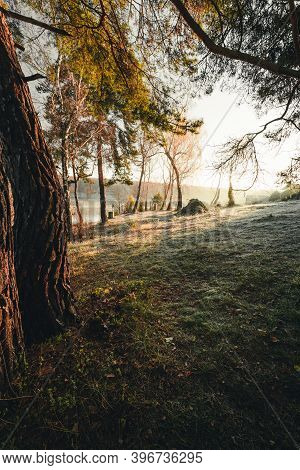 Beautiful Misty And Foggy Early Morning Forest With Frozen Green Grass On Amazing Sunrise. Sunlight