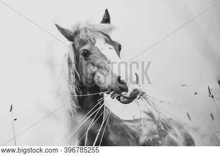 Young Mini Pony Horse In Black And White