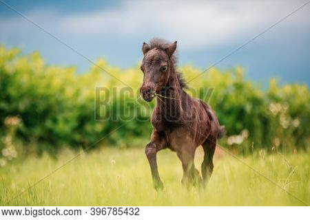 Young Mini Pony Horse On A Green Meadow