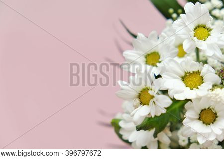 Chamomile Flowers. White Daisies Close-up On A Light Pink Background. Floral Greeting Card Blank. Co