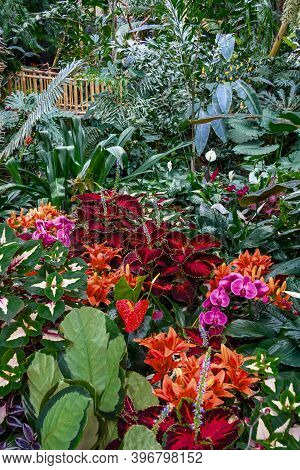 A Fragment Of The Winter Garden Of Exotic Plants In The Greenhouse Vancouver Bloedel Conservatory