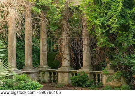 Ivy Growing On Stone Pillars Or Columns In Mountain Recreational Forest Or Park.