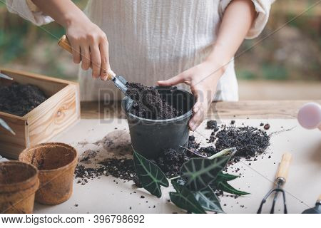 Woman Preparing To Replant Plants By Use A Shovel To Scoop The Soil Into The Pot. Indoor Gardening H