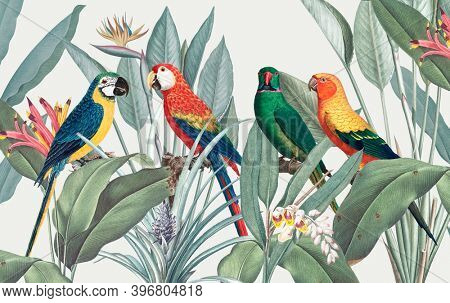 Colorful macaws with tropical background illustration