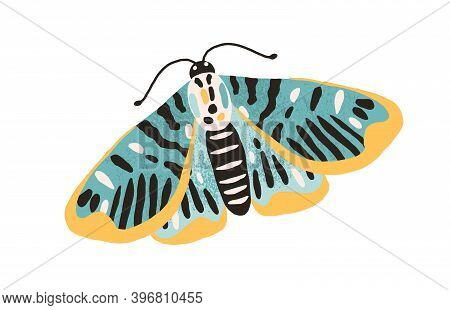 Gorgeous Single Butterfly With Colored Wings And Antennae Isolated On White Background. Pretty Flyin