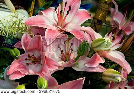 Bunch Of Pink Stargazer Lily Flowers And Buds At Republic Day Horticultural Show In Lalbagh Botanica