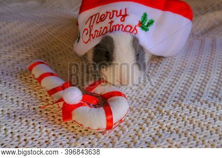 White And Gray Baby Rabbit In Red Santa Claus With Text Merry Christmas On White Knitted Blanket, Sn