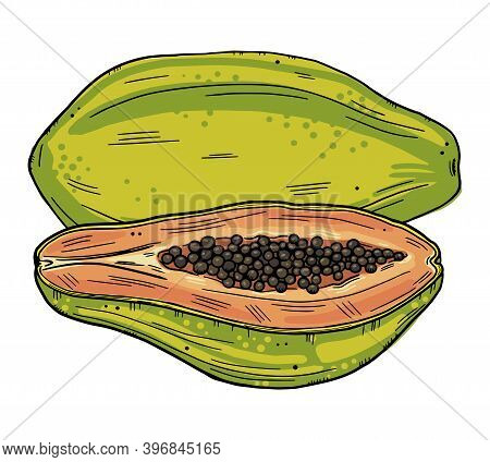 Color Illustration Of Papaya. Whole Fruit And Half Papaya In Doodle Style. Isolated Objects On A Whi
