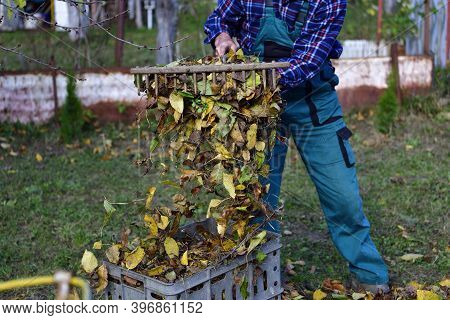 Yellow Fallen Autumn Leaves And Plastic Crate For Harvesting By Hand Rake