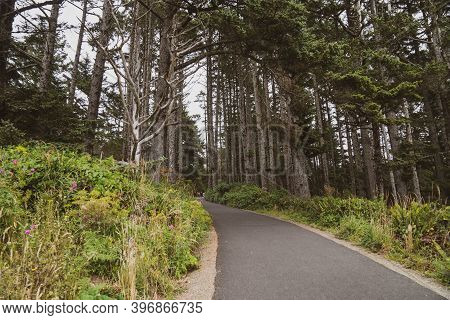 Hiking Trail Through A Forest With Tall Mossy Trees In Cape Disappointment State Park In Washington