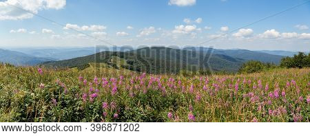Summer Nature Scenery With Purple Wildflowers Growing On Top Of Hill