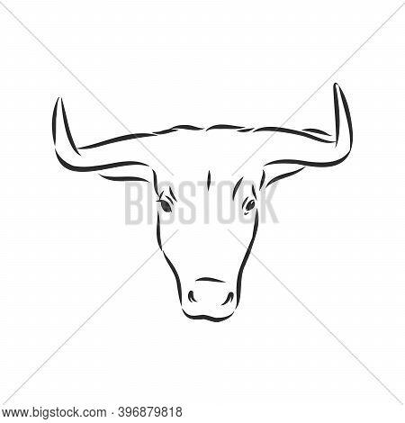 Sketch Bull. Vector Hand Drawn Illustration. Side View. Bull Vector Sketch Illustration