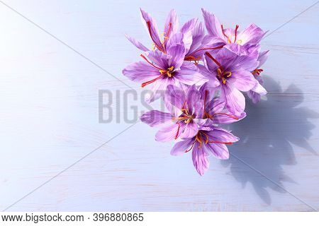 Crocus Sativus, Commonly Known As Saffron Crocus On A Blue Wooden Background. It Is Among The World'