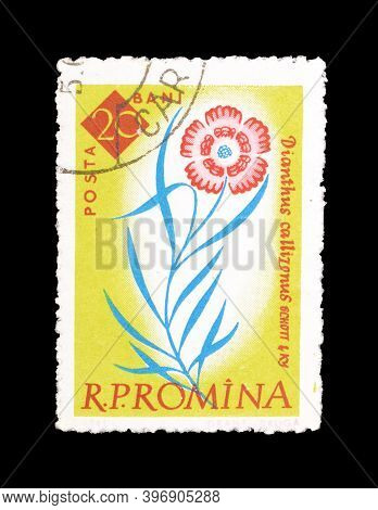 Romania - Circa 1961 : Cancelled Postage Stamp Printed By Romania, That Shows Dianthus Callizonus Fl