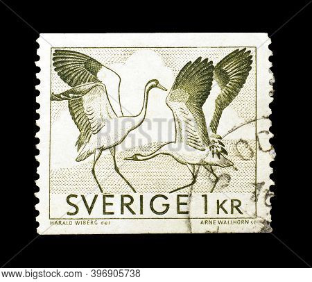 Sweden - Circa 1967 : Cancelled Postage Stamp Printed By Sweden, That Shows Storks, Circa 1967.