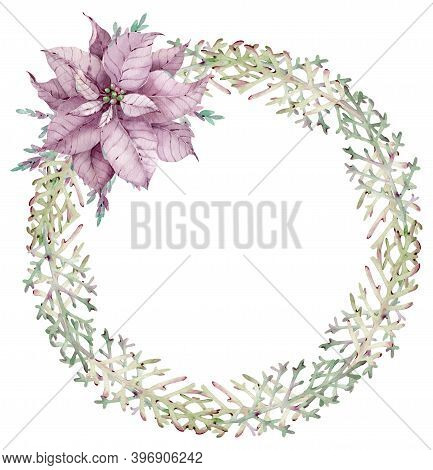 Watercolor Christmas Juniper Wreath With Violet Poinsettia Flower. Hand-drawn New Years Template. Fe