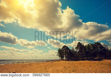 Wild Desert Beach With Pine Trees On A Suny Day