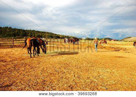 horses at the yellow ranch