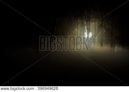Moody Image With A Light Globe Used In Cinematography In A Dark Forest At Night With Smoke Above The