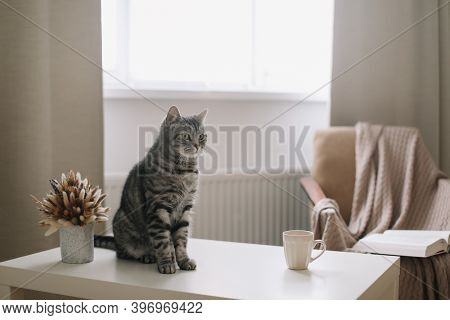 Funny Cat On Hygge Background At Home. Cozy Flatlay Of Female Blogger. Scandinavian Style, Hygge Con