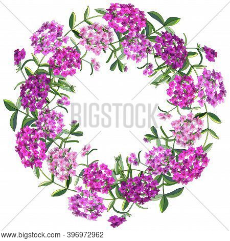 Floral Wreath Of Phlox Flowers Isolated On White.