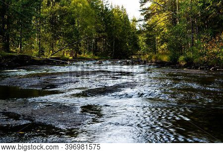 River Stream Running Quietly Through A Boreal Forest.