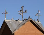 roofline of a church steeple with three crosses and pigeons roosting on them poster
