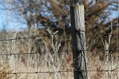 Old fence post with barbed wire and brush in the background poster