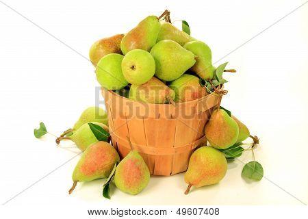 Pears In Bushel