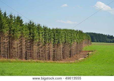 Ardennes landscape