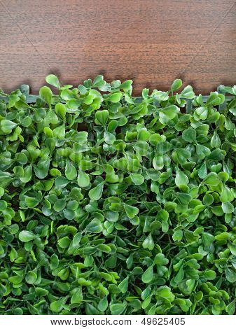 Fake Green Leaf Group On Wood
