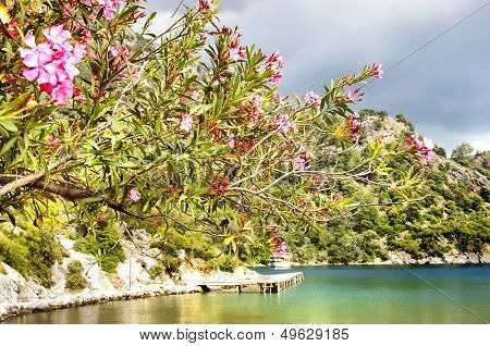 turquoise cove with flowering trees