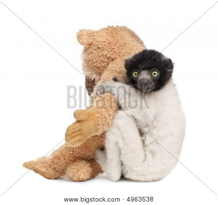 Young Crowned Sifaka With His Teddy Bear  - Propithecus Coronatus (3 Months)
