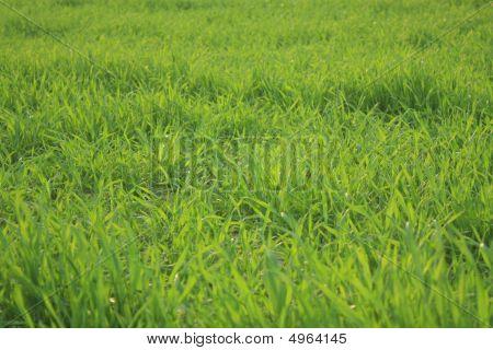 Grass, Plant, Plants