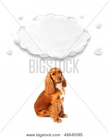 Cute brown cocker spaniel with cloud above her head poster