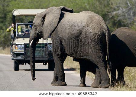 Elephants and tourist
