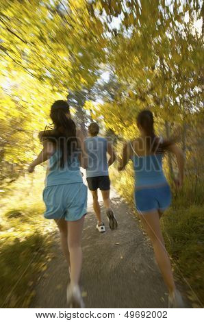 Rear view of young friends jogging in forest