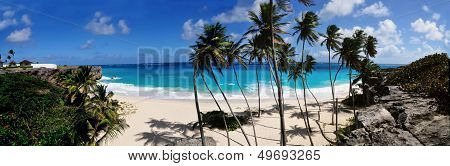 Panoramic Beach And Palm Trees