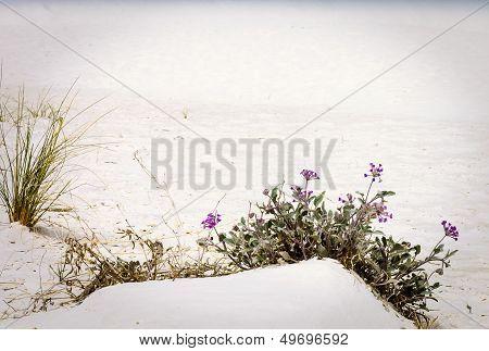 Sand Dunes Of White Sands