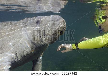Woman greeting a manatee