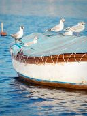 Seagull standing on top of a small wooden boat poster