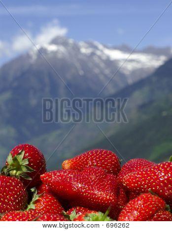 Alpine Freshness
