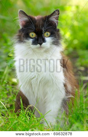 Pretty Cat Or Kitten Sitting In Grass