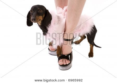 A woman standing in her black shoes with clear heeles while her dog stands on the top of her feet wearing it's pink feathered outfit. poster