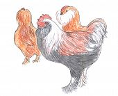 Different breed of rooster and hens, farm animal, sketch poster