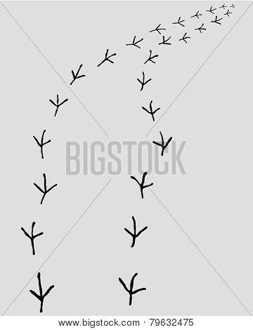trail of birds