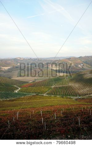 View Of  Barbaresco