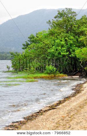 Mangrove Vegetation