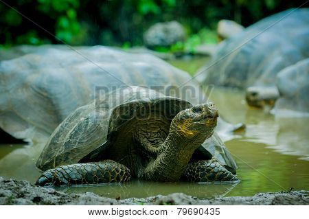 giant turtles in san cristobal galapagos islands