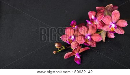 Beautiful Top Down Spa Concept Of Twig Red Orchid Flower, Phalaenopsis With Water Drops On Black Bac